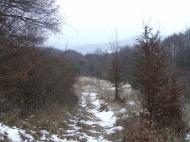 Bokros rész Regéc közelében