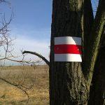 Pest megyei piros 7. szakasz 2017. március 4.